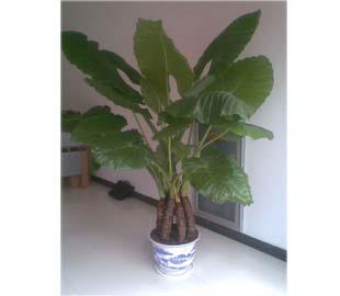 重庆植物租赁