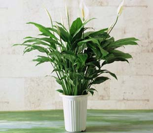 重庆中型植物租赁