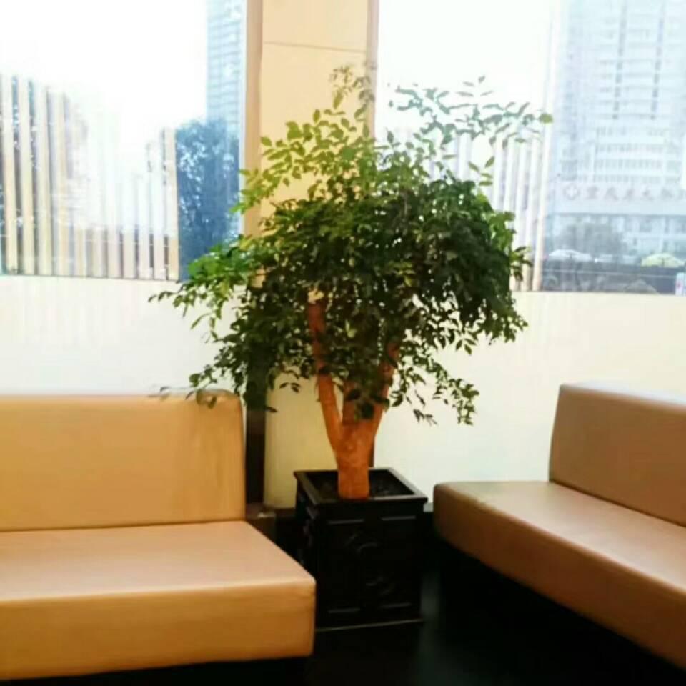 家庭式植物出租