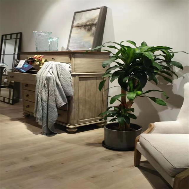 重庆室内植物出租