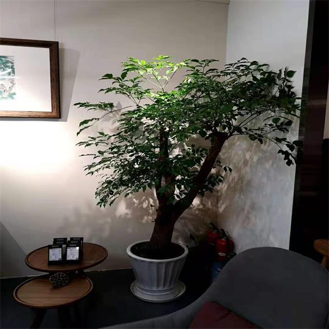 重庆室内植物租摆