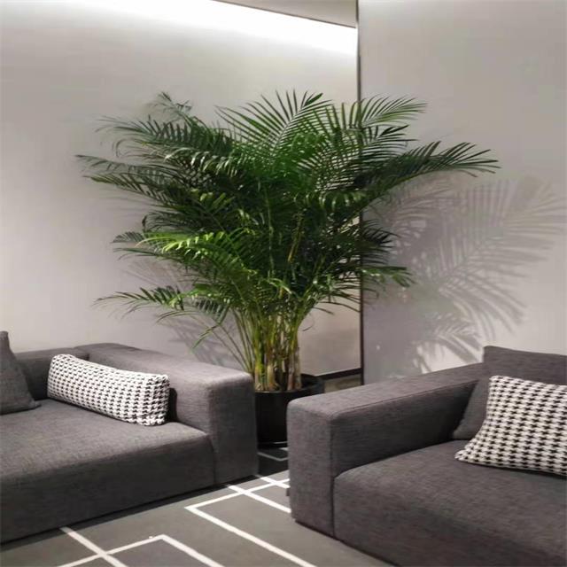 重庆大型植物出租