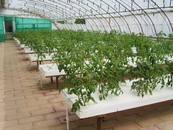 新型农业温室大棚