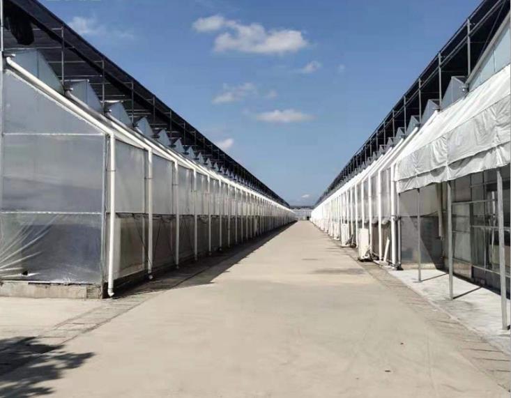 新型日光温室大棚