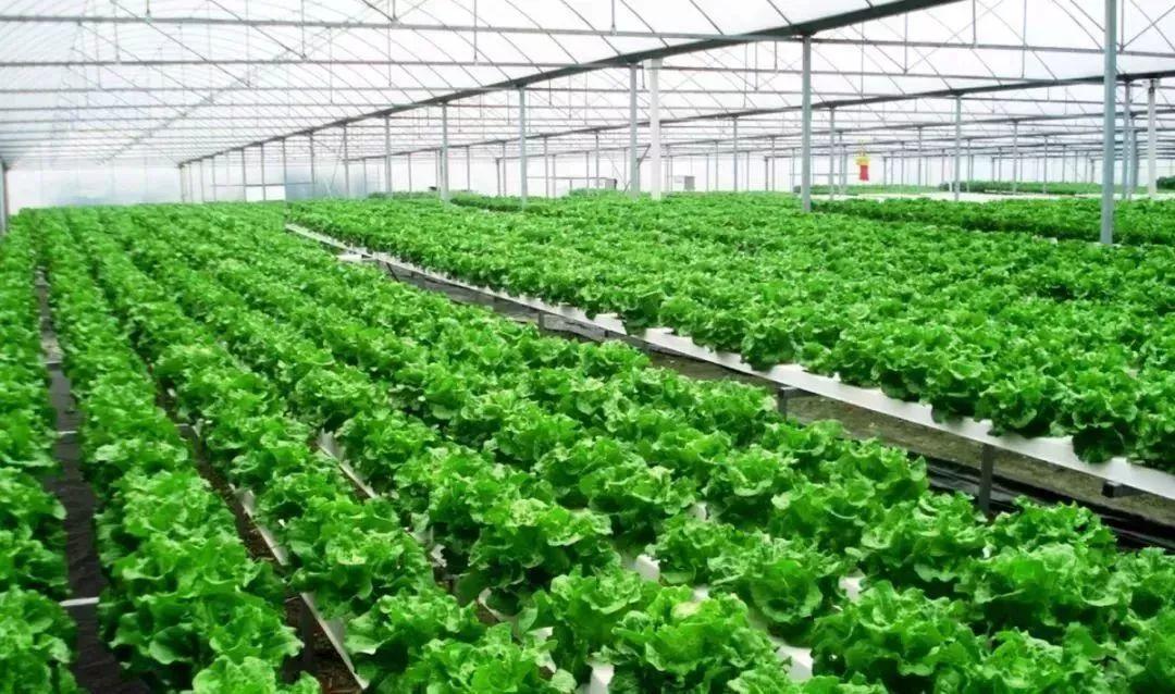 钢构温室蔬菜大棚