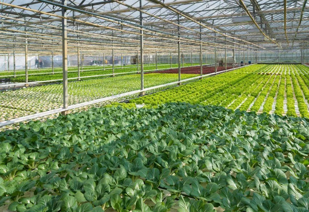 银川蔬菜温室大棚