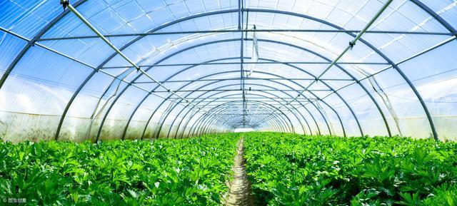 玻璃蔬菜温室大棚