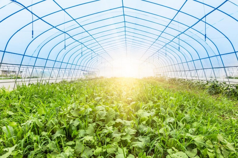 智能农业温室大棚