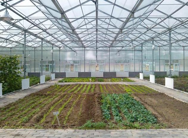 在銀川溫室大棚安裝防蟲網的作用