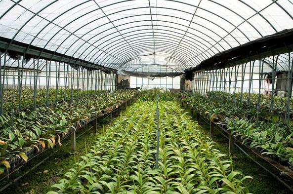 银川养殖温室大棚建设时的注意事项