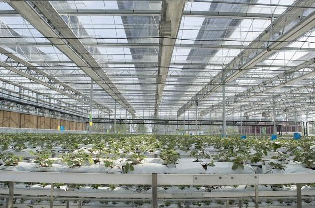 銀川玻璃溫室大棚施肥料的的十個關鍵點