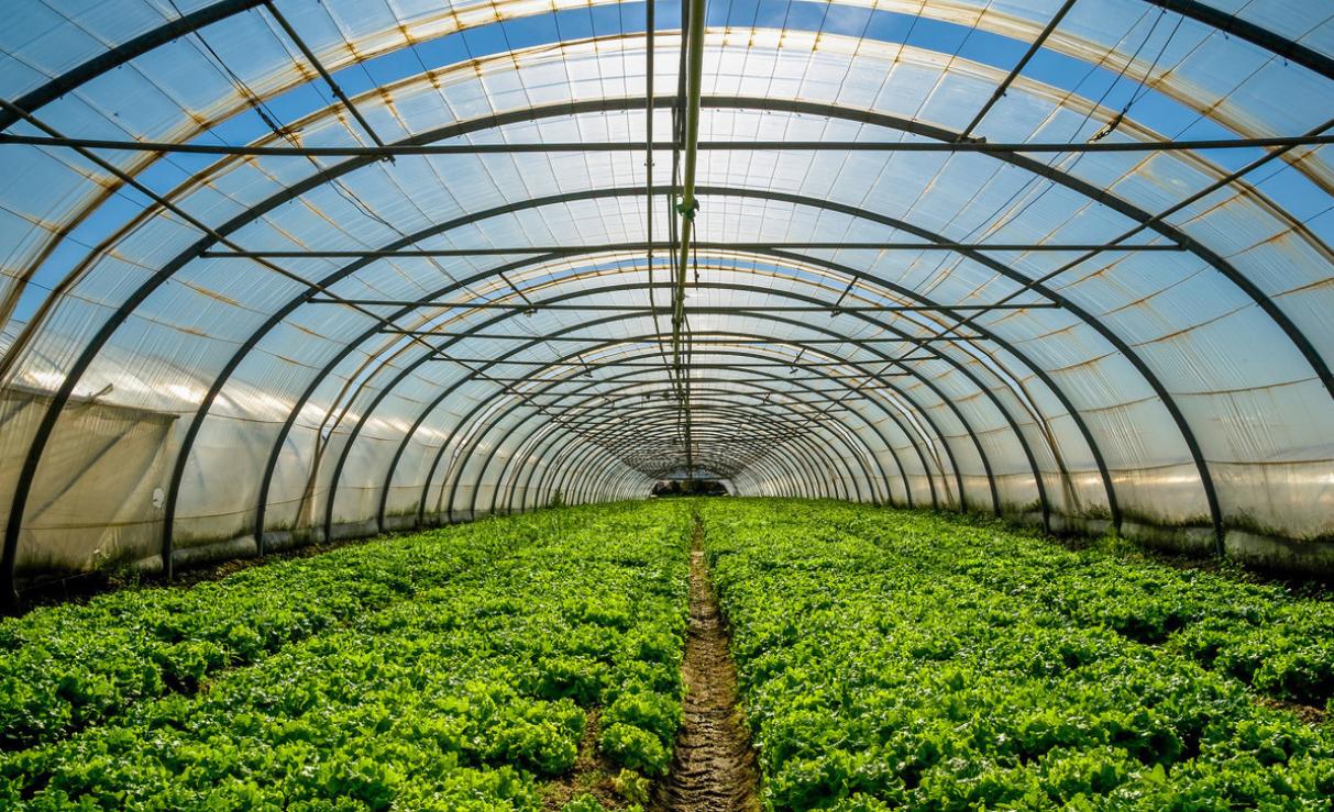 黄瓜育苗温室大棚
