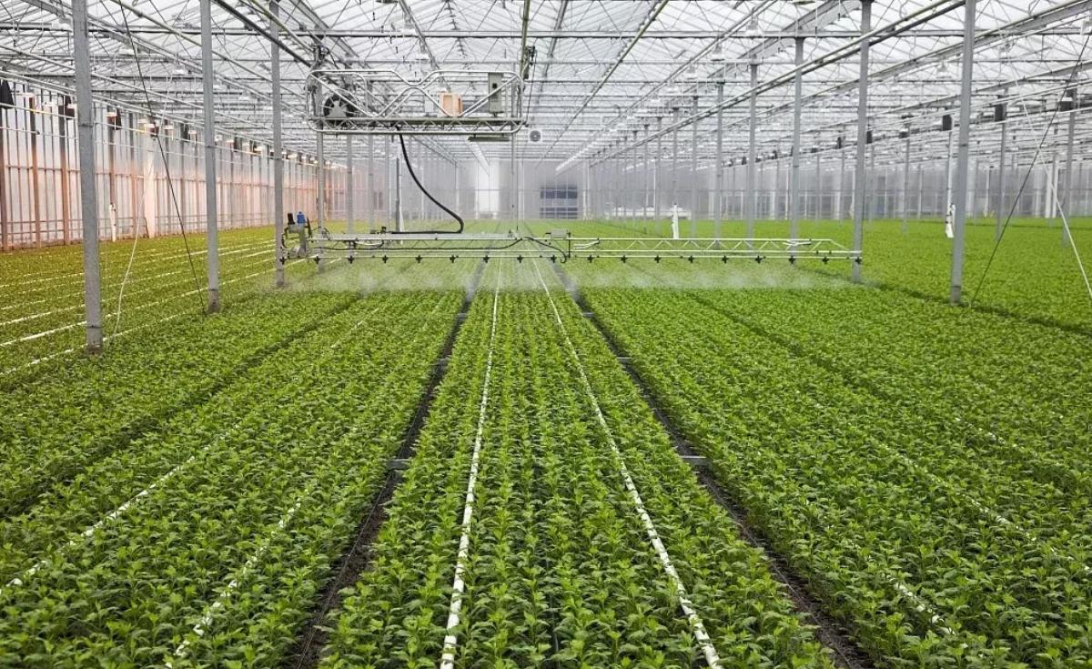 銀川溫室大棚蔬菜種植肥水正確的管理的方法