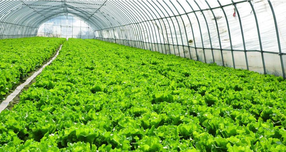 银川蔬菜温室大棚碰到多变的气温方法