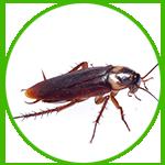 治理蟑螂来西安保百业环保,我们帮您消灭蟑螂