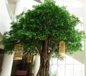 西安室内仿真榕树