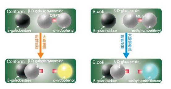 酶底物试剂