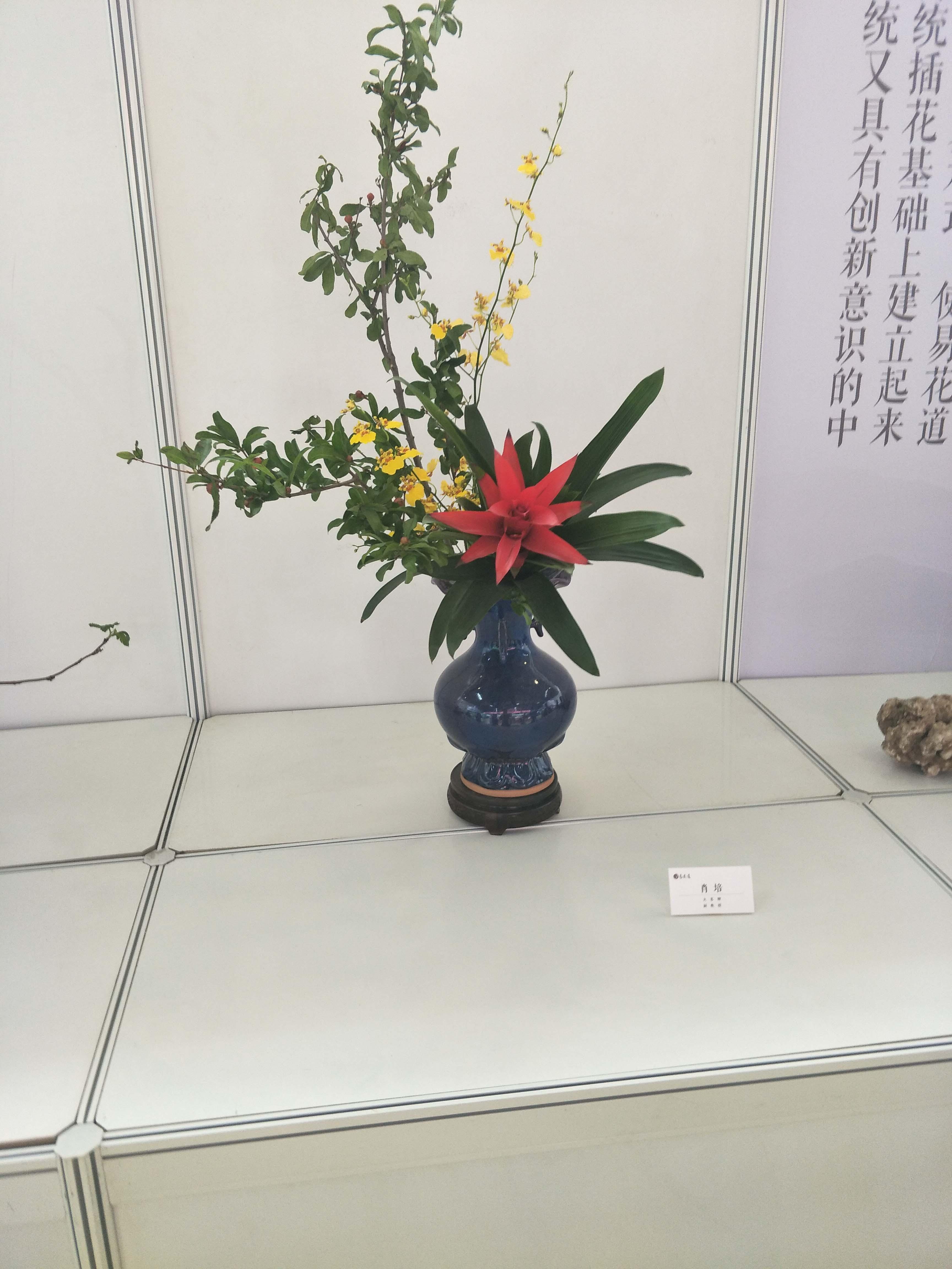 西安草花销售种类