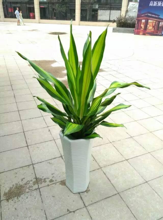西安绿植销售