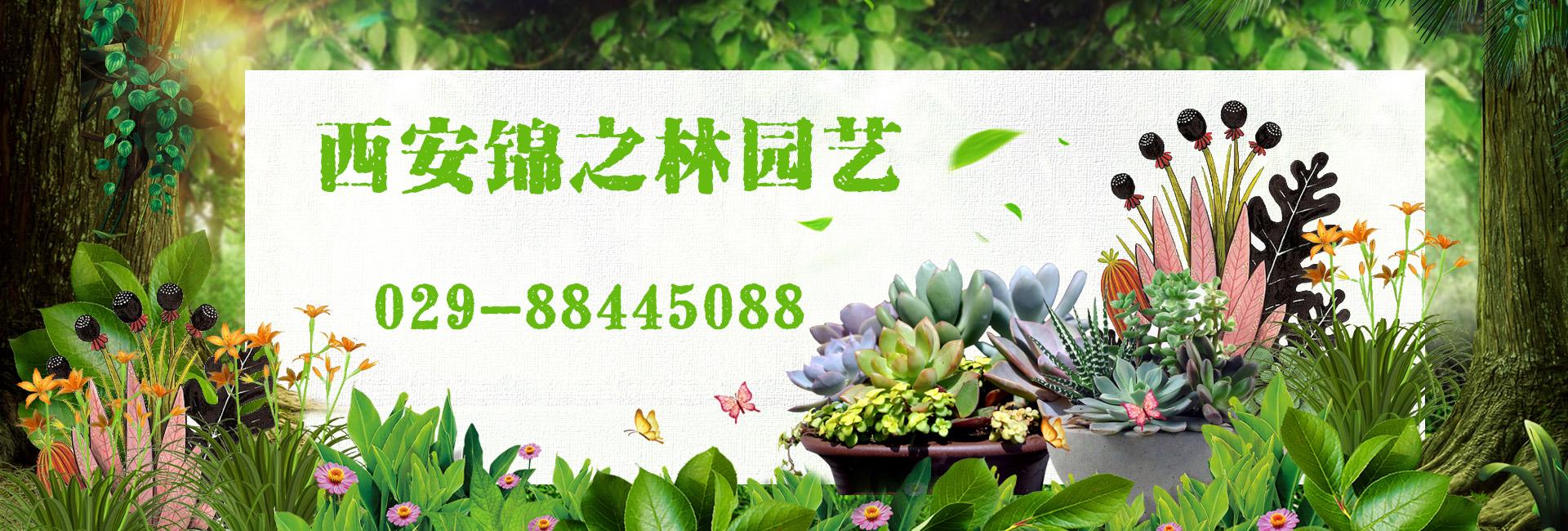 西安绿植租赁