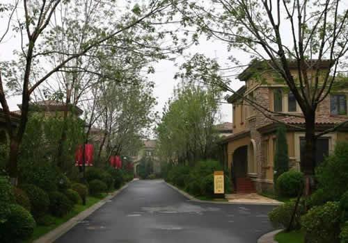 小区路面绿化人行道