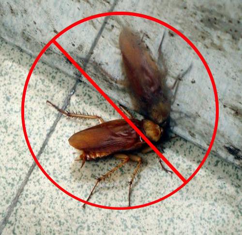 上门灭蟑螂