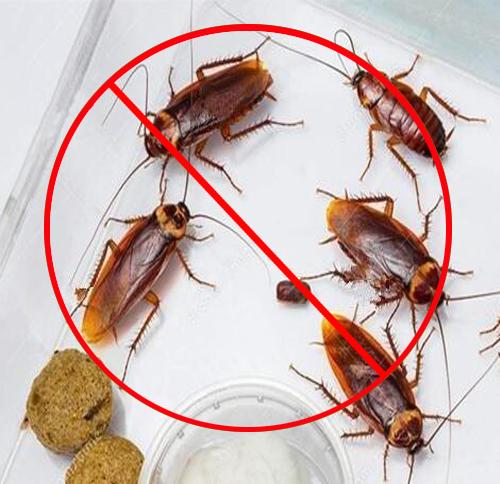 专业灭蟑螂