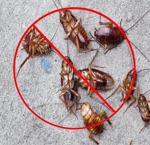 快速灭蟑螂