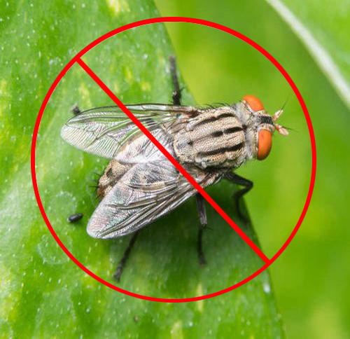 灭苍蝇公司
