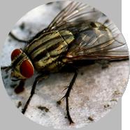 西安灭蚊蝇