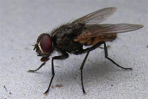 西安灭苍蝇公司