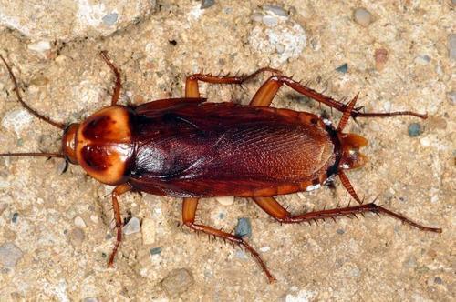 西安专业灭蟑螂公司哪家好?