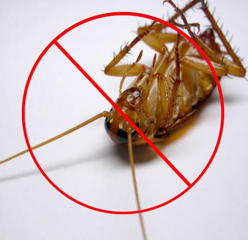 西安滅蟑螂公司分享防治蟑螂的9個措施