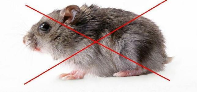 西安灭老鼠