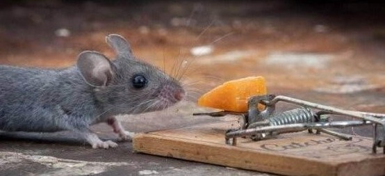 灭老鼠公司