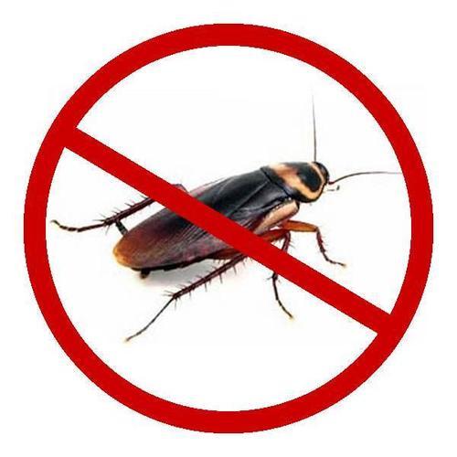 西安除蟑螂