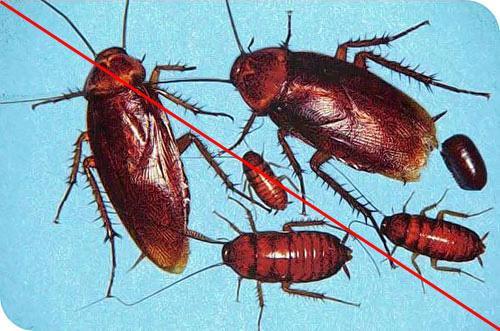 西安专业灭蟑螂公司