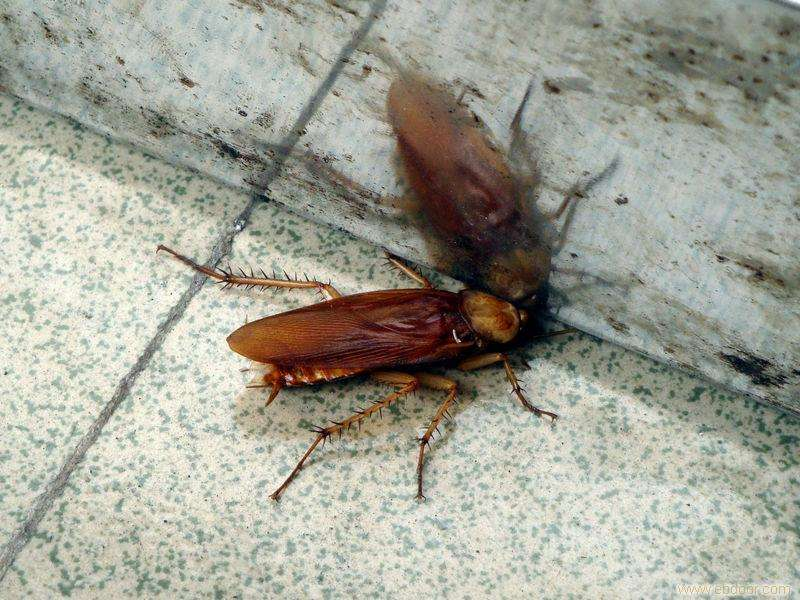生活中常用的灭蟑螂技巧有哪些