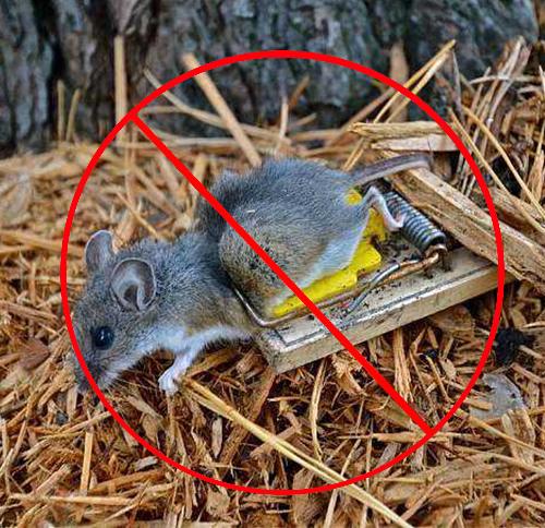 西安专业灭鼠
