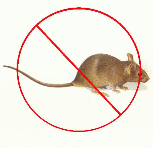 西安灭鼠服务