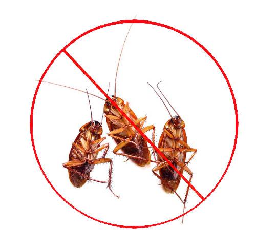 预防饭店蟑螂滋生的方法