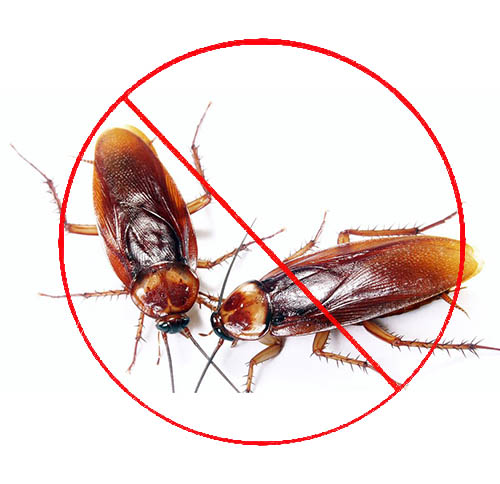 西安灭蟑螂