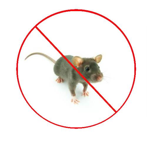 小区灭老鼠