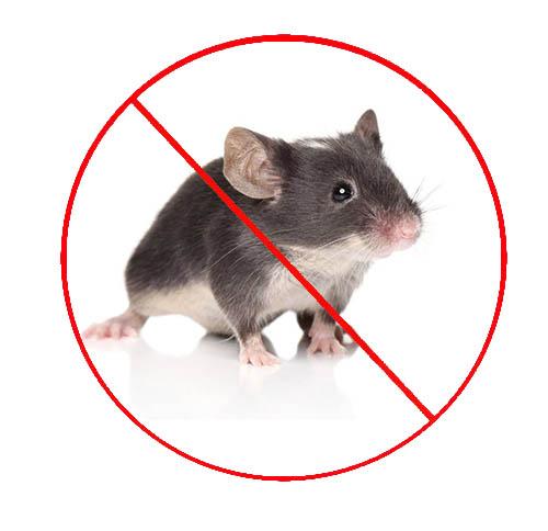 西安小区如何灭老鼠