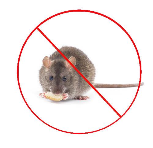 厨房灭老鼠