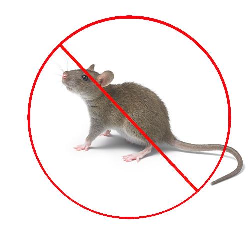 西安市民在冬季如何预防老鼠