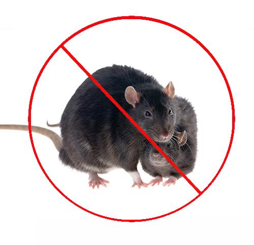 西安商超防鼠灭鼠的方法有哪些?