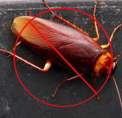 西安消杀公司分享超市灭杀蟑螂的方法