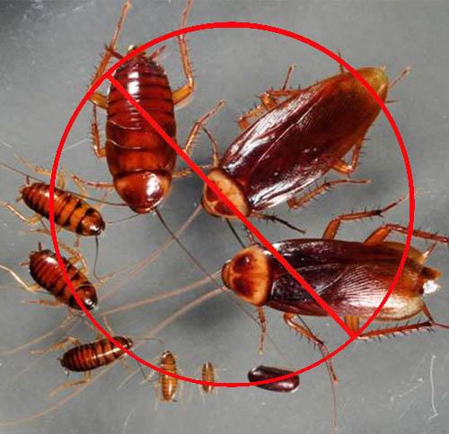 工厂灭蟑螂