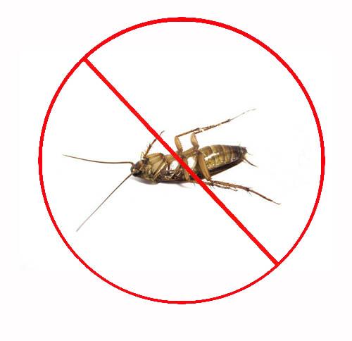 小区灭蟑螂